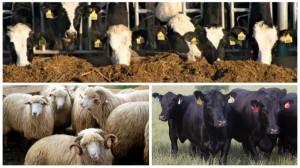 CJAPIA Bihor. Sprijin pentru creşterea animalelor 2021 - Depunerea cererilor iniţiale anuale