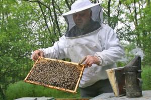 APIA. Ajutorul de stat pentru apicultori - Termen 31 octombrie la depunerea cererilor