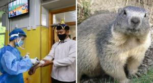 În Rusia se testează populaţiile de rozătoare după apariţia unor cazuri în Mongolia şi China - A reapărut ciuma bubonică