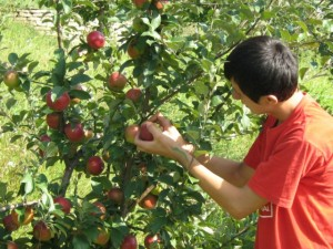 Condiţii de eligibilitate pentru - Obţinerea sprijinului pentru culturi pomicole