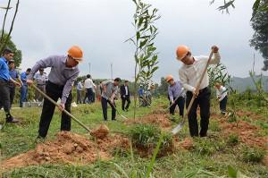 Submăsura 8.1 - Termen la sprijinul pentru prima împădurire