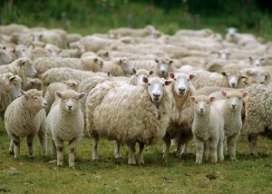 APIA. Acte obligatorii pentru subvenţiile la animale