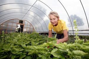 Pentru cultivarea plantelor aromatice - ajutor de minimis pentru fermieri