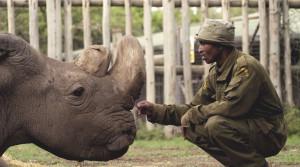 Cercetătorii încearcă să salveze o subspecie de rinoceri din care mai există doar două exemplare - Exterminaţi de oameni