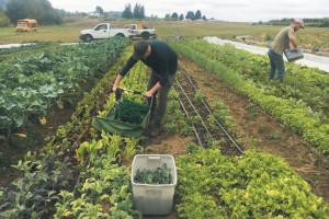Plata zilierilor și a lucrătorilor sezonieri - A fost aprobată subvenția de stat